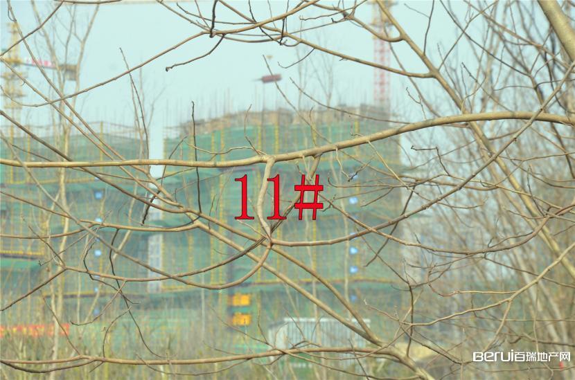 国贸天悦11#约建12层