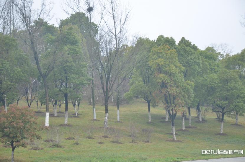 置地·滨湖双玺周边公园