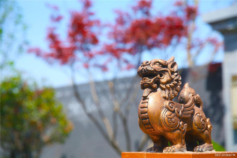 文一泰禾·合肥院子 示范区实景图