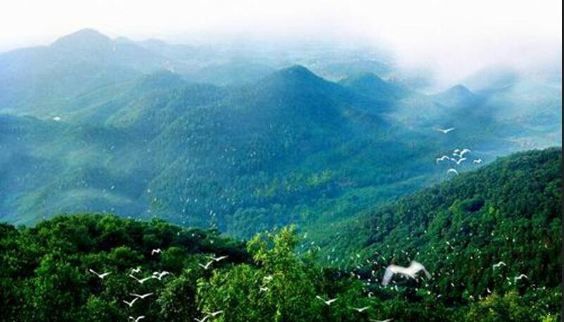 万振紫蓬湾附近紫蓬山森林公园